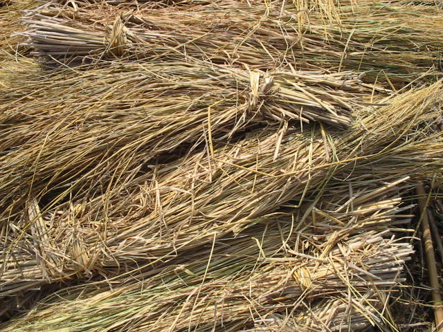 File:Rice straw.jpg