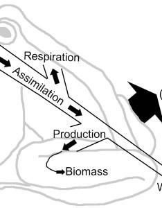 also energy flow ecology wikipedia rh enpedia