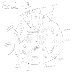 How To Draw A Cell Diagram Sky Multiroom Wiring Drawing Learn Teaching Nonmajors Biology