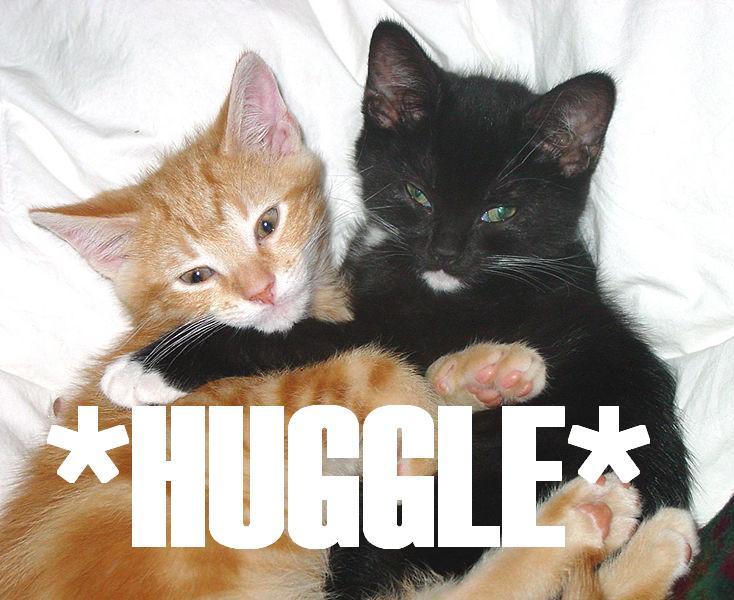 http://commons.wikimedia.org/wiki/File:Huggle4gurch.jpg