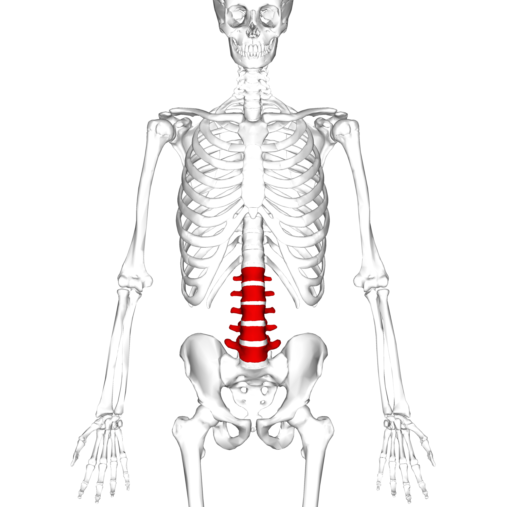 hight resolution of diagram of vertebral fracture