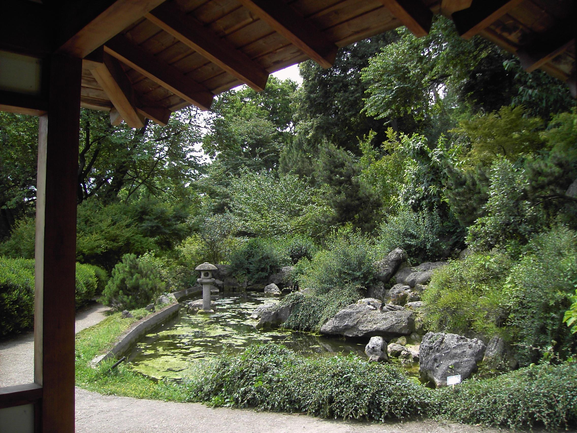 Fileorto Botanico  Il Giardino Giapponese 2747jpg