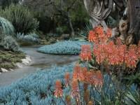 File:Aloe & blue stick succulents, Huntington Desert ...