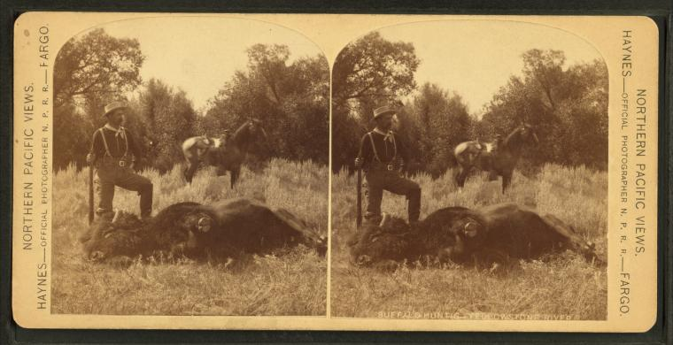 English Hunting Buffalo
