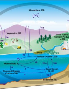 Global carbon cycle also ecology biogeochemical cycles wikibooks open books for an world rh enbooks