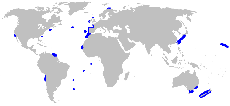 world map showing blue colored areas to mark sightings