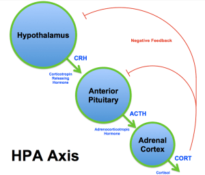 Pituitary Neuroendocrine Axis | Leaders in Pharmaceutical