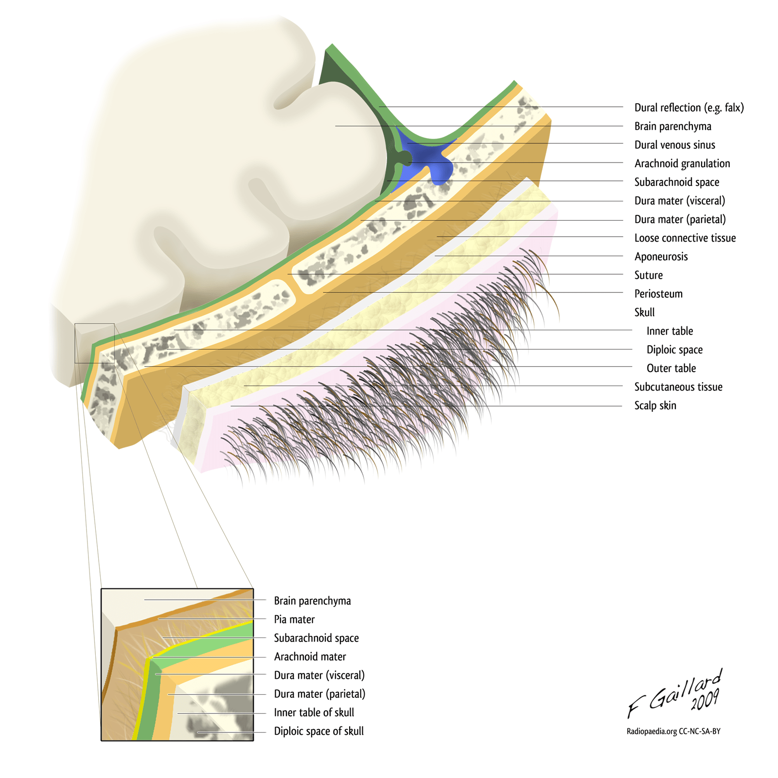 hight resolution of diagram of layer of skin