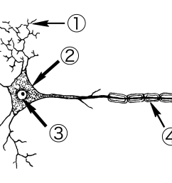 file neuron psf png wikimedia commonsfile neuron psf png [ 2264 x 1398 Pixel ]