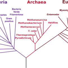 Venn Diagram Of Bacteria And Archaea Hopkins Breakaway Wiring Archivo:phylogenetic Tree-es.png - Wikipedia, La Enciclopedia Libre