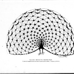 Peacock Bird Diagram House Wiring Maker File Studies In The Art Anatomy Of Animals Microform