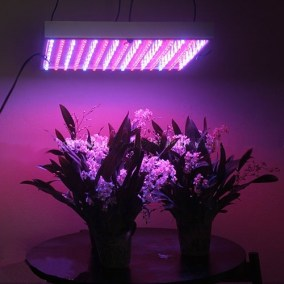 Image result for led plant lights