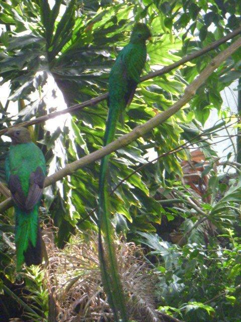 El Nido aviario  Wikipedia la enciclopedia libre
