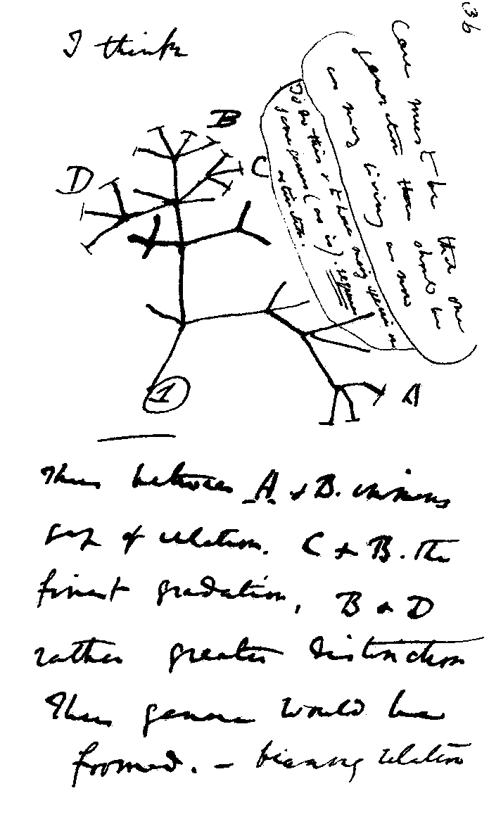 Darwin's evolution tree