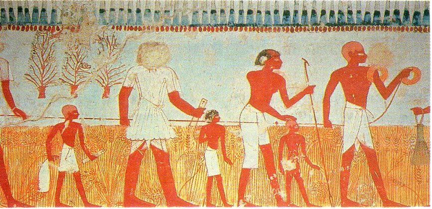 Measuring and recording the harvest is shown in a wall painting in the Tomb of Menna, at Thebes (18th dynasty).