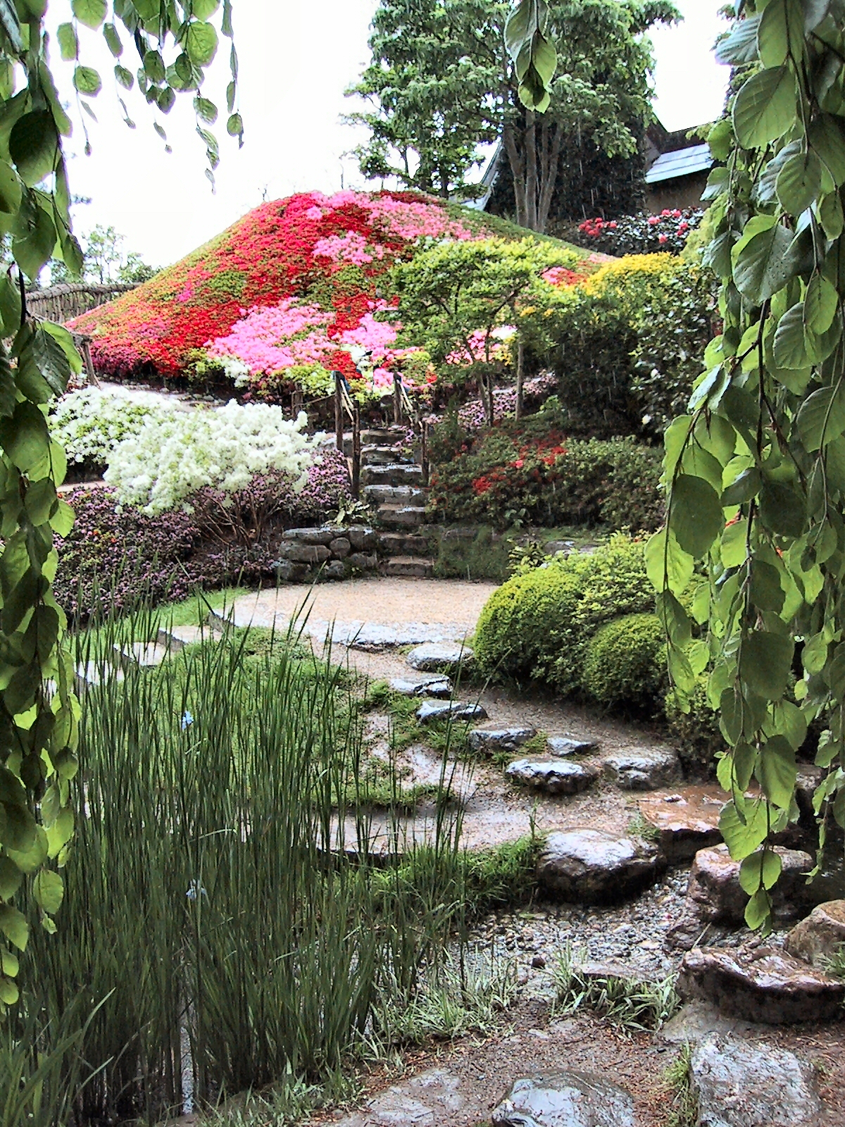 Bassin De Jardin Tortue - Décoration de maison idées de design d ...