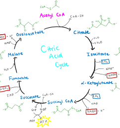 diagram od acid wiring diagram split diagram od acid [ 1396 x 1110 Pixel ]