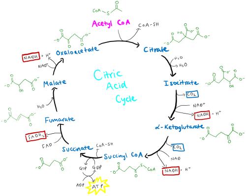 small resolution of diagram od acid wiring diagram split diagram od acid