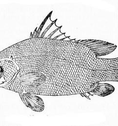 fish labeling diagram [ 1706 x 1031 Pixel ]