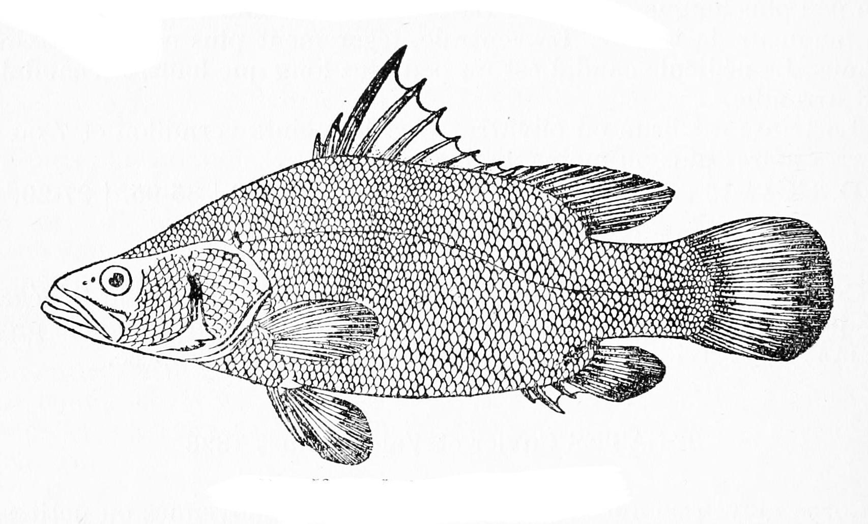 hight resolution of fish labeling diagram
