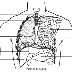Fibromyalgia Pain Diagram 4 Way Switch Wiring Australia File Respiratory System Chest Jpg