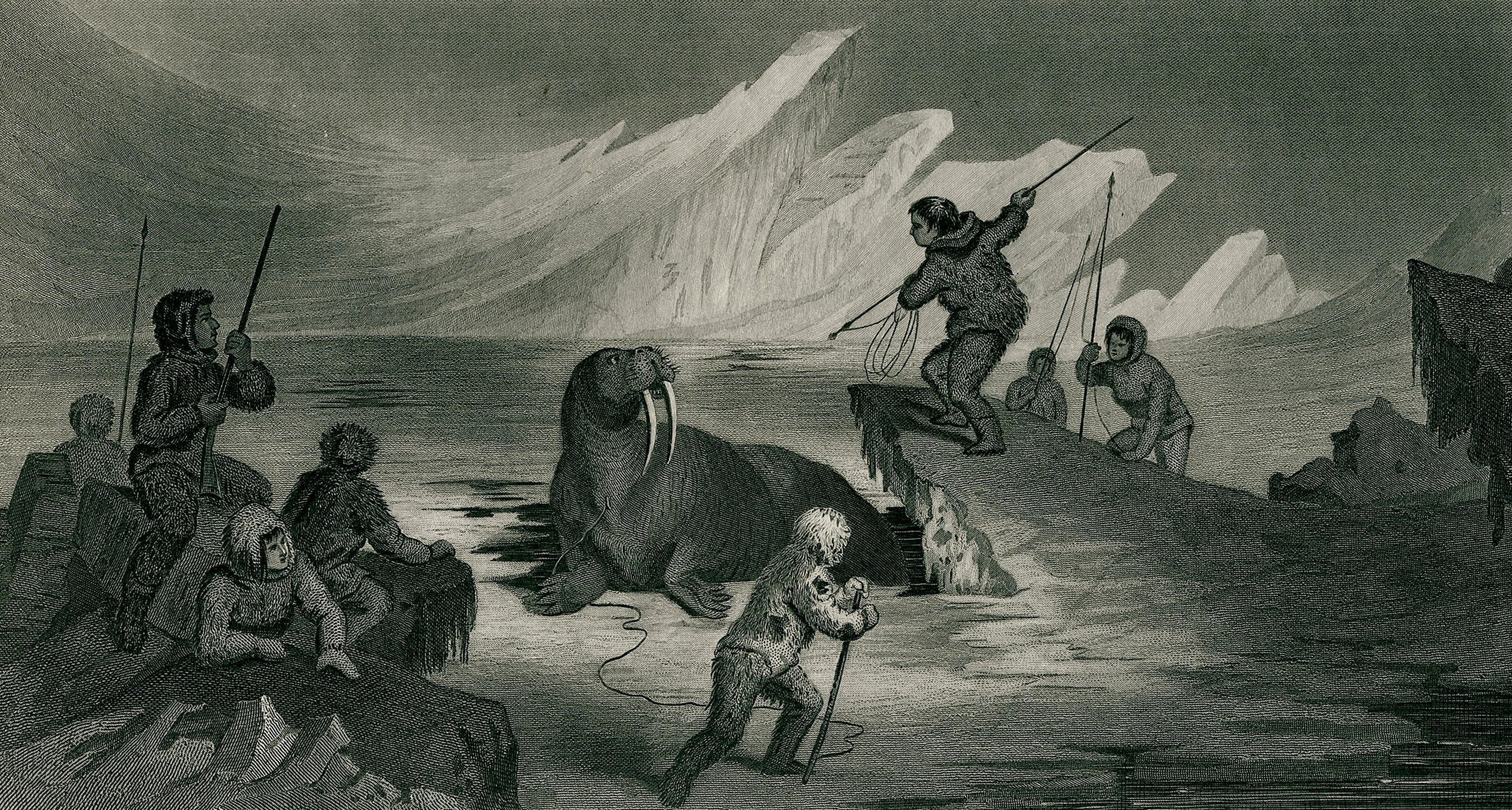 Culture of Greenland - Walrus Hunting