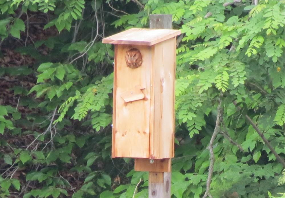 FileShawnee SM wood duck house 7244610280jpg