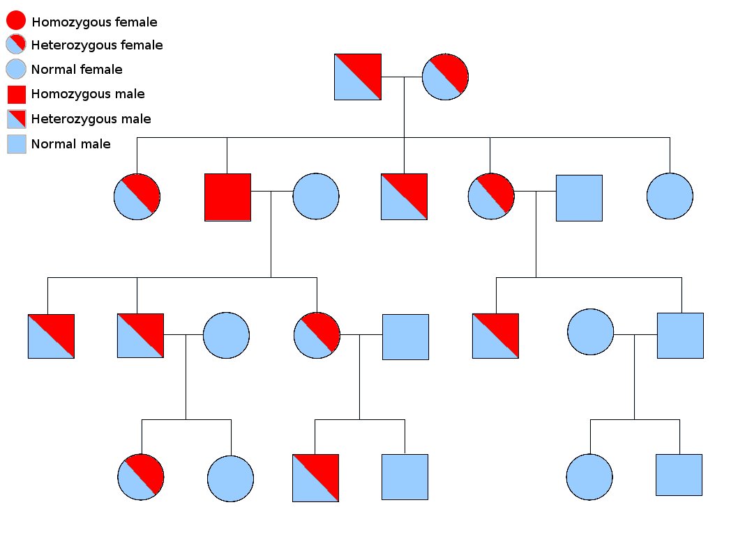 heredity family tree diagram er for web application file:autosomal recessive.png - wikimedia commons