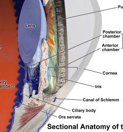 inner eye diagram label [ 2000 x 1500 Pixel ]