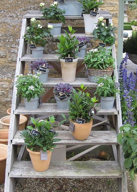 File:Plant display, Daylesford