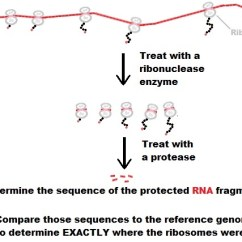 What Is An Affinity Diagram Sequence For Railway Reservation Ribosome Profiling - Wikipedia