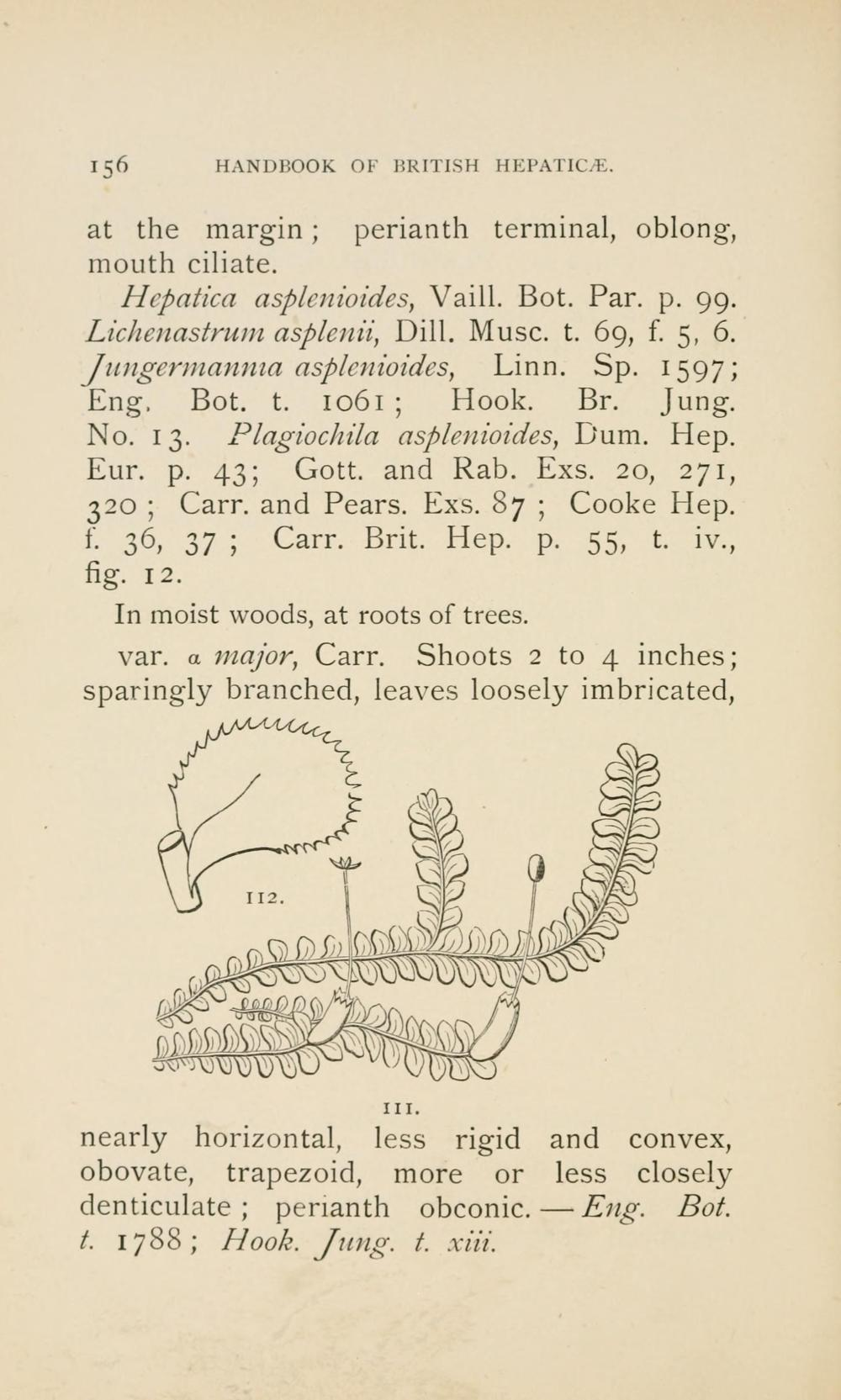 medium resolution of file handbook of british hepatic containing descriptions and figures of the indigenous species of marchantia jungermannia riccia and anthoceros page