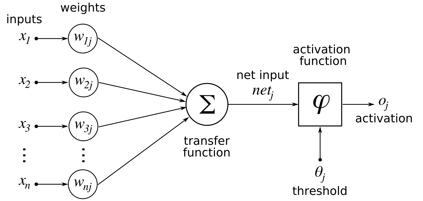 hight resolution of empty diagram of neuron