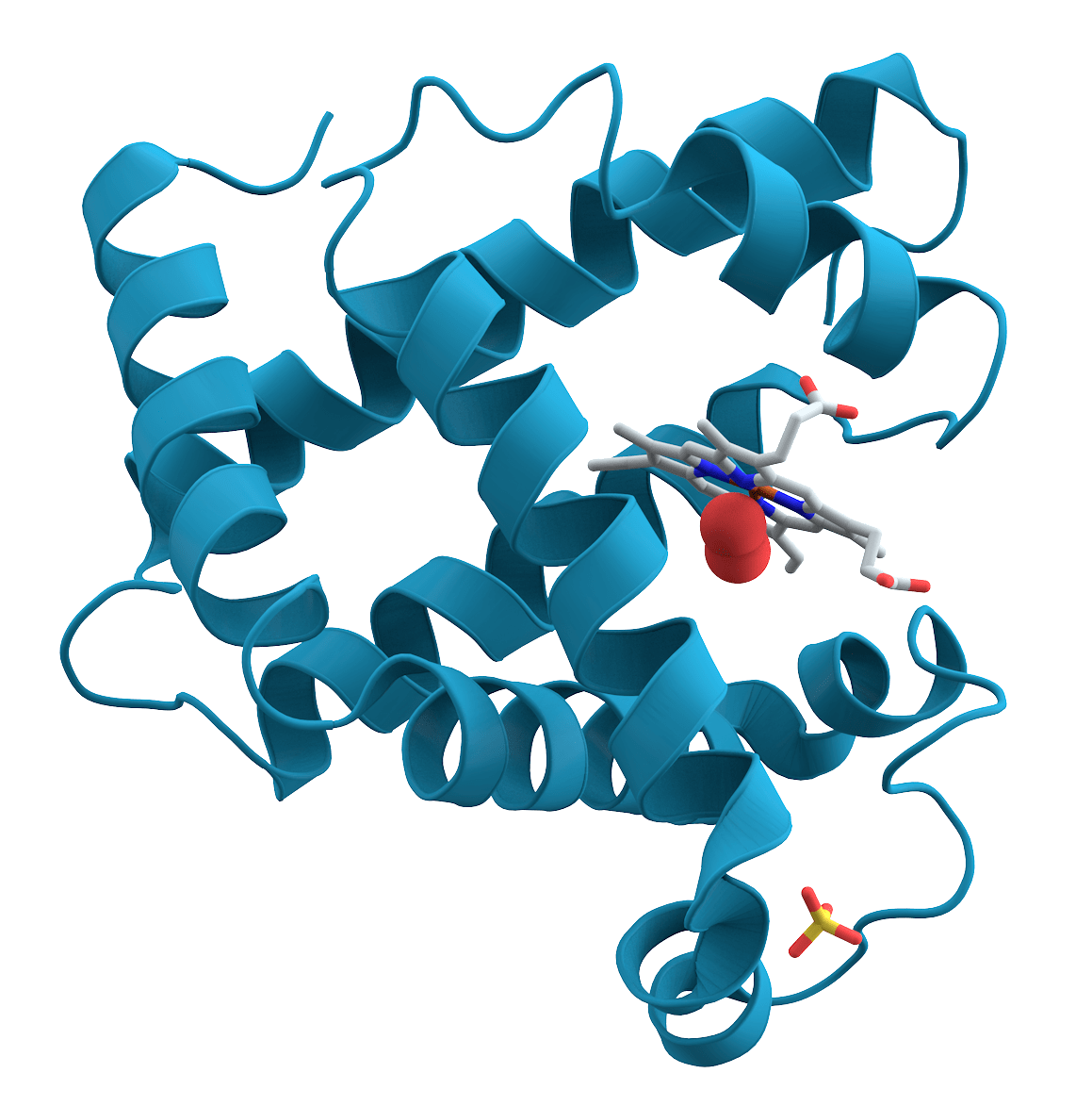 Image result for tertiary structure of proteins, pictures