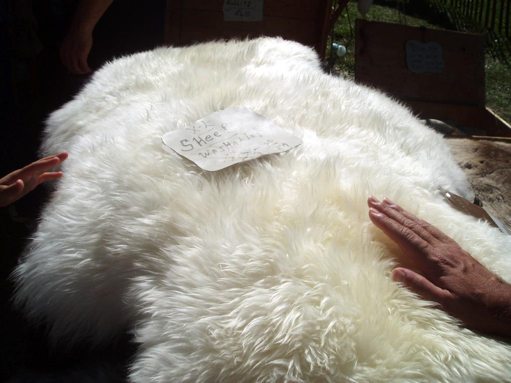 animal skin chair covers kidkraft white table and chairs sheepskin wikipedia
