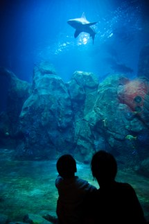 Adventure Aquarium Camden New Jersey