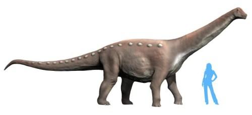 Mansourasaurus NT.jpg