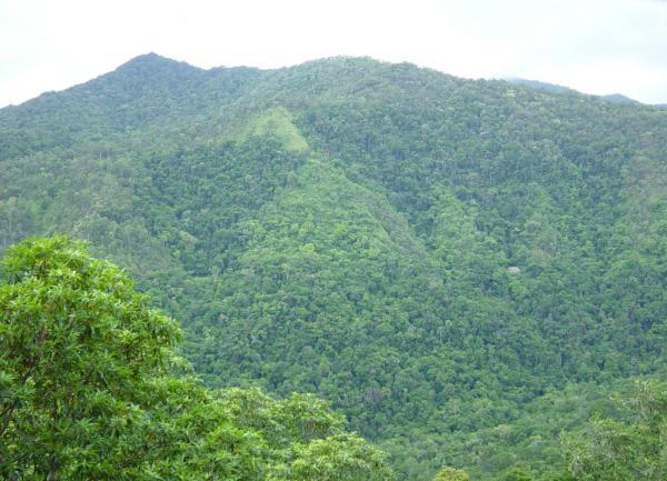 trees produce oxygen