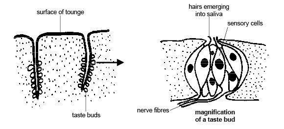 snake hearing diagrams