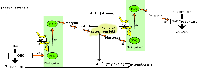 photosynthesis z scheme diagram autostart remote starter wiring file cs png wikimedia commons