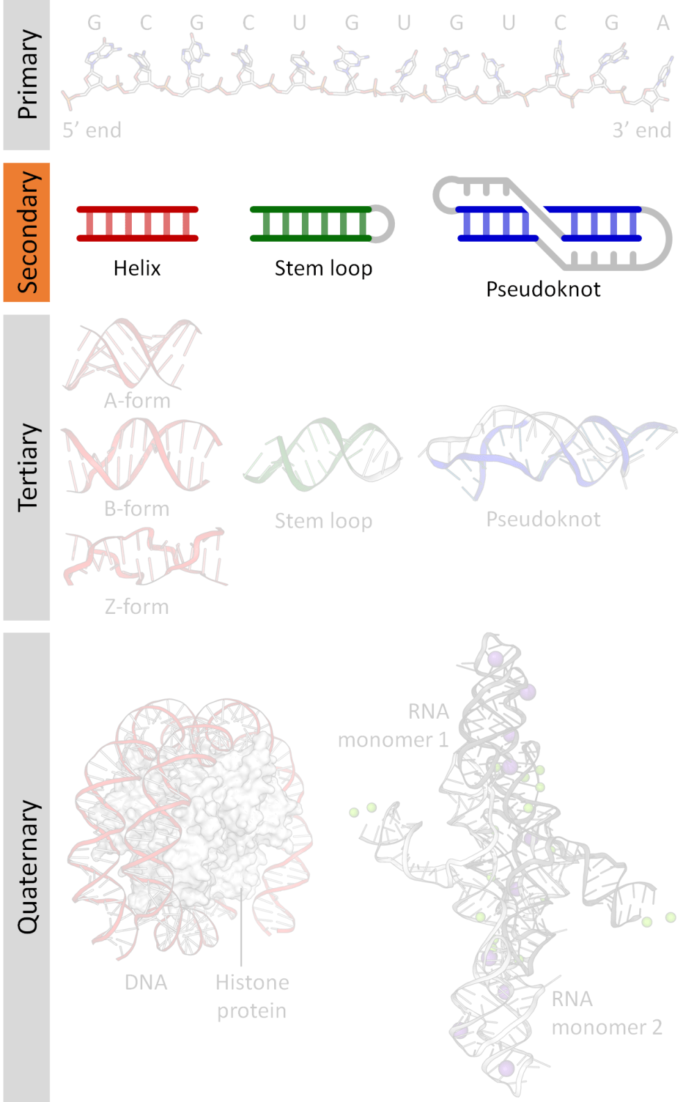 medium resolution of nucleic acid secondary structure