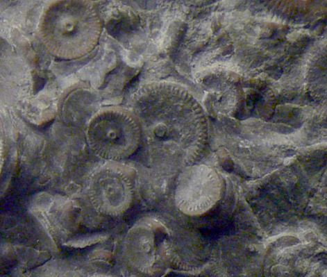 engranes fosilizados