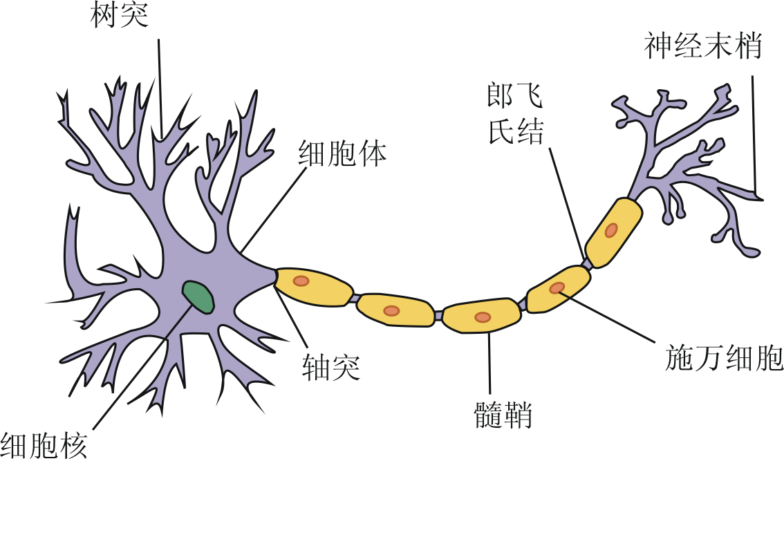 neuron diagram labeled arco phase converter wiring file png wikimedia commons