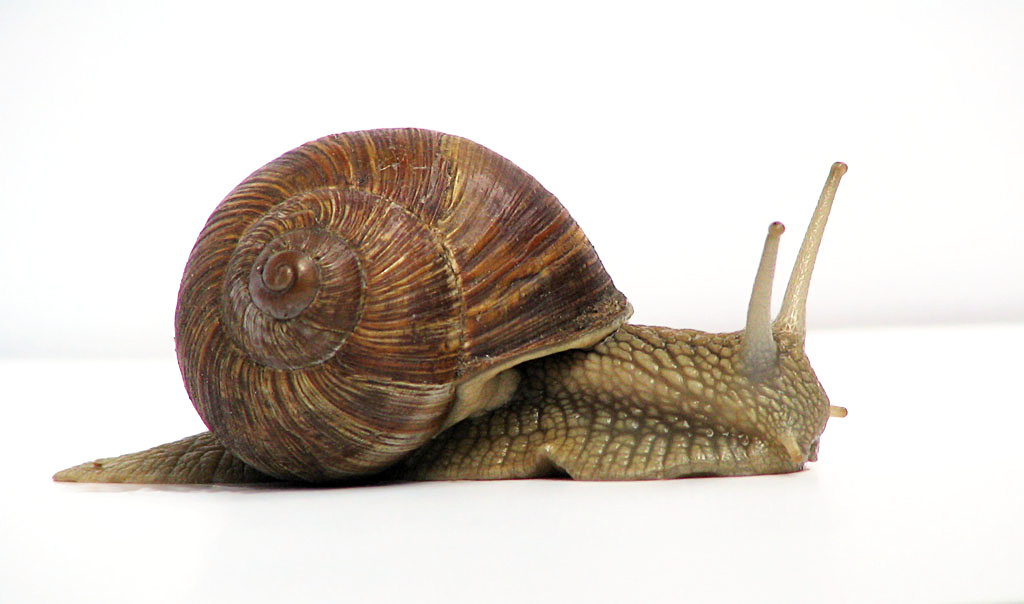 How slow?