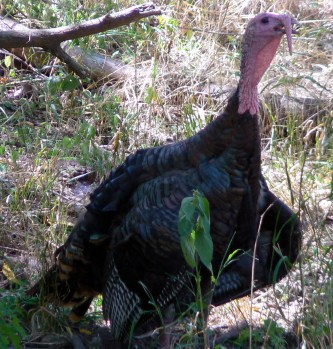 Happy Thanksgiving?