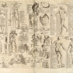 Old Scientific Diagram Ron Francis Wiring Diagrams File Anatomical Chart Cyclopaedia 1728 Volume 1