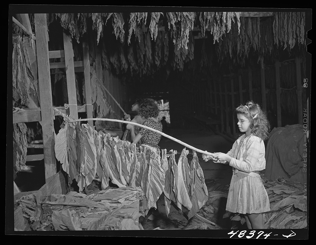 FileGreat Depression young girl stringing tobaccojpg  Wikimedia Commons