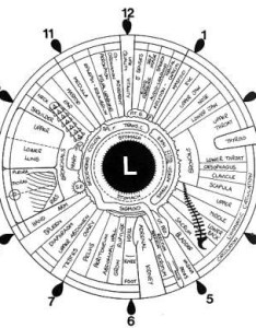 File iridology iris eye chart left mirrorg also wikimedia commons rh commonsmedia