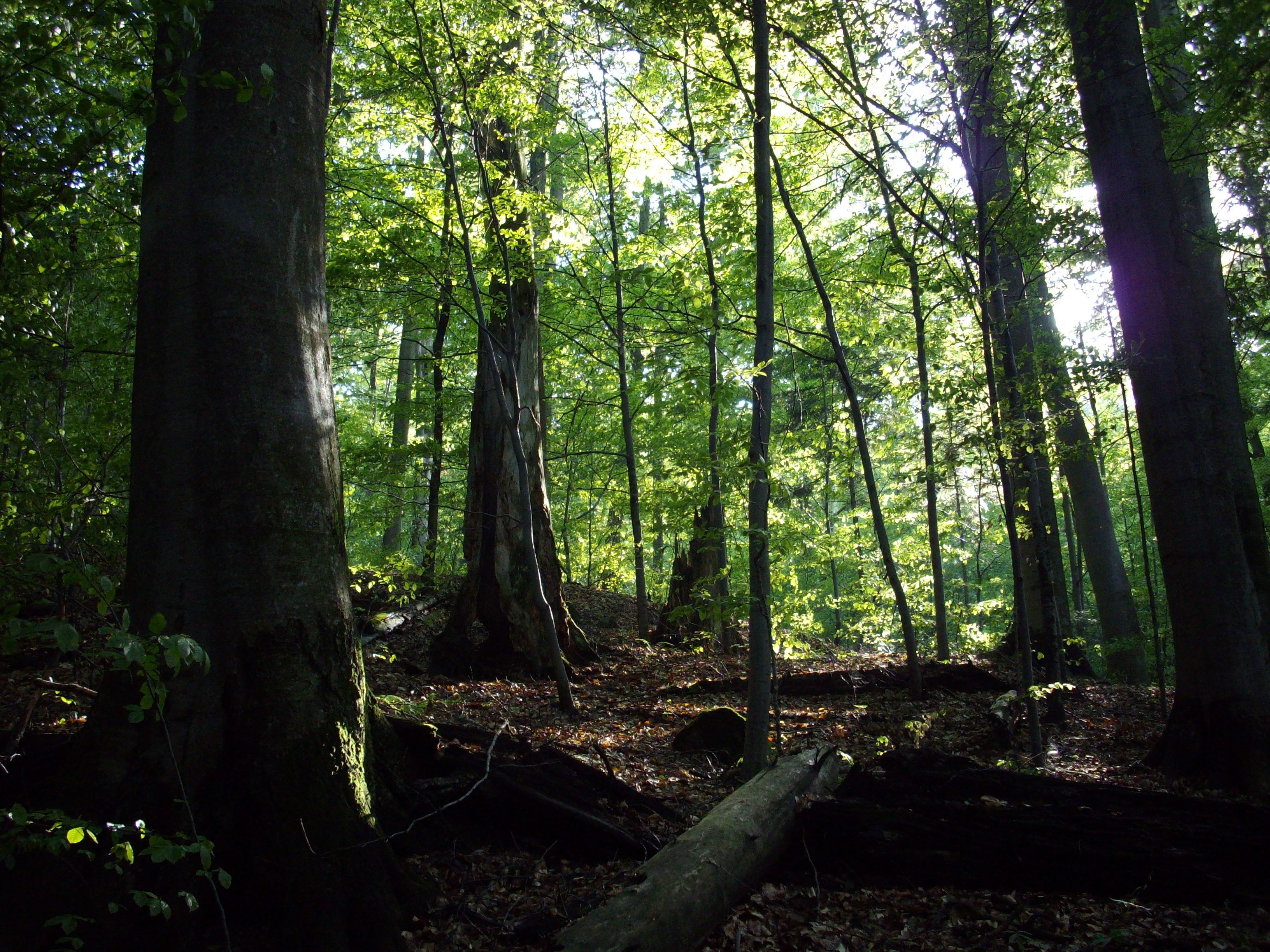 Powered by create your own unique website with customizable templates. Temperate Deciduous Forest Wikipedia