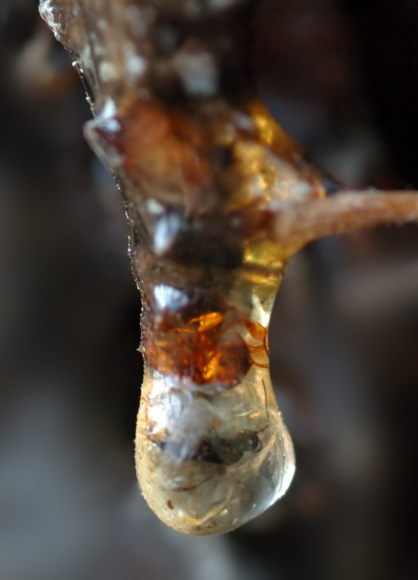 Resin Tree with Insects